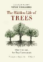 Cover-Bild zu The Hidden Life of Trees (eBook) von Wohlleben, Peter
