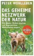 Cover-Bild zu Das geheime Netzwerk der Natur von Wohlleben, Peter