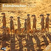 Erdmännchen Kalender 2022 - 30x30 von Ackermann Kunstverlag (Hrsg.)