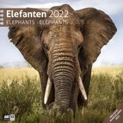 Elefanten Kalender 2022 - 30x30 von Ackermann Kunstverlag (Hrsg.)