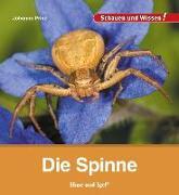 Cover-Bild zu Prinz, Johanna: Die Spinne