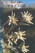 Cover-Bild zu Zauberhafte Alpenblumen