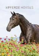 Cover-Bild zu Pferde 2022 - Bildkalender 24x34 cm - Kalender mit Platz für Notizen - mit vielen Zusatzinformationen - Horses - Wandkalender - Alpha Edition von ALPHA EDITION (Hrsg.)