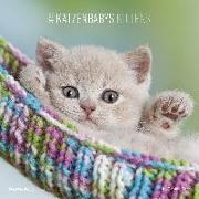 Cover-Bild zu ALPHA EDITION (Hrsg.): Katzenbabys 2022 - Broschürenkalender 30x30 cm (30x60 geöffnet) - Kalender mit Platz für Notizen - Wandkalender - Wandplaner - Katzenkalender