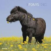 Cover-Bild zu Alpha Edition (Hrsg.): Ponys 2022 - Broschürenkalender 30x30 cm (30x60 geöffnet) - Kalender mit Platz für Notizen - Ponies - Bildkalender - Wandplaner - Alpha Edition