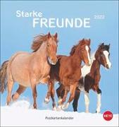 Cover-Bild zu Stuewer, Sabine: Pferde Postkartenkalender 2022