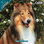 Cover-Bild zu Collie 2010