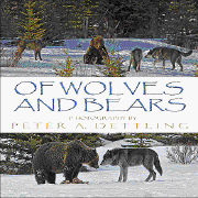 Cover-Bild zu Of Wolves and Bears 2010