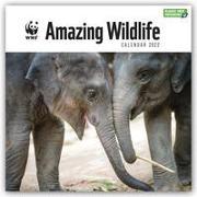 Cover-Bild zu WWF Amazing Wildlife - Faszinierende Tierwelt 2022