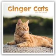 Cover-Bild zu Ginger Cats - Rothaarige Katzen 2022 - 18-Monatskalender