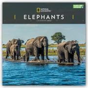 Cover-Bild zu National Geographic Elephants - Elefanten 2022