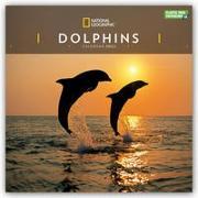 Cover-Bild zu National Geographic Dolphins - Delfine 2022