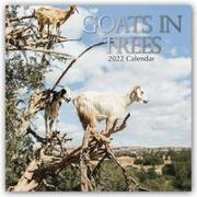 Cover-Bild zu Goats in Trees - Ziegen auf Bäumen 2022 - 18-Monatskalender