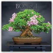 Cover-Bild zu Bonsai 2022 - 16-Monatskalender
