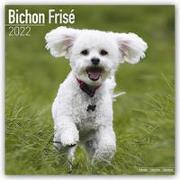 Cover-Bild zu Bichon Frisé - Gelockter Bichon 2022 - 16-Monatskalender mit freier DogDays-App