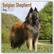 Cover-Bild zu Belgian Shepherd Dog - Belgischer Schäferhund 2022
