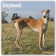 Cover-Bild zu Greyhounds - Großer Englischer Windhund 2022 - 16-Monatskalender mit freier DogDays-App