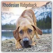 Cover-Bild zu Rhodesian Ridgeback - Afrikanischer Löwenhund 2022 - 16-Monatskalender