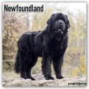 Cover-Bild zu Newfoundlands - Neufundländer 2022 - 18-Monatskalender mit freier DogDays-App