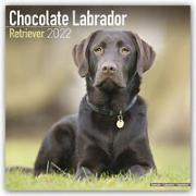Cover-Bild zu Chocolate Labrador Retrievers - Braune Labradore 2022 - 18-Monatskalender mit freier DogDays-App