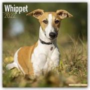 Cover-Bild zu Whippets - Kleine Englische Windhunde 2022 - 18-Monatskalender mit freier DogDays-App