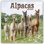Cover-Bild zu Alpacas - Alpakas 2022