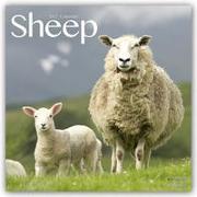 Cover-Bild zu Sheep - Schafe 2022 - 18-Monatskalender