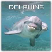 Cover-Bild zu Dolphins - Delfine - Delphine 2022 - 18-Monatskalender