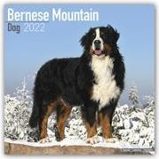 Cover-Bild zu Bernese Mountain Dogs - Berner Sennenhunde 2022 - 18-Monatskalender mit freier DogDays-App