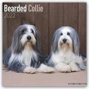 Cover-Bild zu Bearded Collies 2022 - 18-Monatskalender mit freier DogDays-App