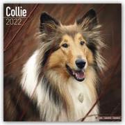 Cover-Bild zu Collies 2022 - 18-Monatskalender mit freier DogDays-App