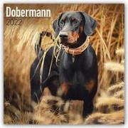 Cover-Bild zu Dobermans International - Dobermänner 2022 - 18-Monatskalender mit freier DogDays-App