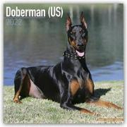 Cover-Bild zu Dobermans - Dobermänner 2022 - 18-Monatskalender mit freier DogDays-App