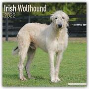 Cover-Bild zu Irish Wolfhounds - Irische Wolfshunde 2022 - 18-Monatskalender mit freier DogDays-App