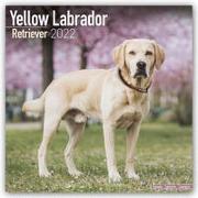 Cover-Bild zu Yellow Labrador Retrievers - Weiße Labradore 2022 - 18-Monatskalender mit freier DogDays-App