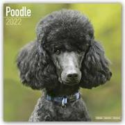 Cover-Bild zu Poodles - Pudel 2022 - 18-Monatskalender mit freier DogDays-App
