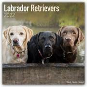 Cover-Bild zu Labrador Retrievers 2022 - 18-Monatskalender