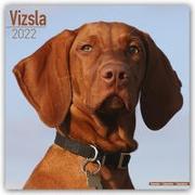 Cover-Bild zu Vizslas - Ungarische Vorstehhunde 2022 - 18-Monatskalender mit freier DogDays-App