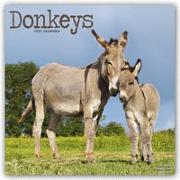 Cover-Bild zu Donkeys - Esel 2022 - 18-Monatskalender