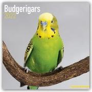 Cover-Bild zu Budgerigars - Wellensittiche 2022