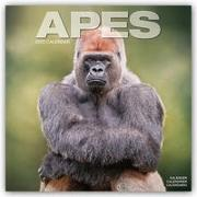 Cover-Bild zu Apes - Affen 2022