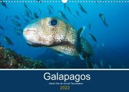 Cover-Bild zu Photography, Iam: Unterwasserwelt Galapagos (Wandkalender 2022 DIN A3 quer)