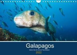 Cover-Bild zu Photography, Iam: Unterwasserwelt Galapagos (Wandkalender 2022 DIN A4 quer)