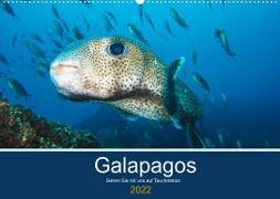 Cover-Bild zu Photography, Iam: Unterwasserwelt Galapagos (Wandkalender 2022 DIN A2 quer)