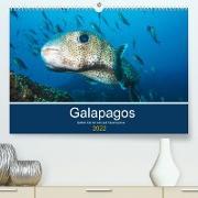 Cover-Bild zu Photography, Iam: Unterwasserwelt Galapagos (Premium, hochwertiger DIN A2 Wandkalender 2022, Kunstdruck in Hochglanz)