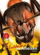 Cover-Bild zu Entdecke die Ameisen von Klinger, Ralf
