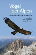 Vögel der Alpen von Caula, Bruno