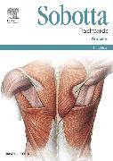 Cover-Bild zu Sobotta Flashcards Muscles von Bräuer, Lars