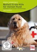Cover-Bild zu DVD - Notfall! Erste Hilfe für meinen Hund von Strodtbeck, Sophie