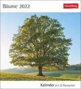Cover-Bild zu Harenberg (Hrsg.): Bäume Kalender 2022